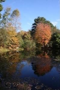 pond 9 Horseshoe