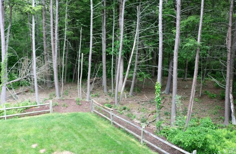 Wooded backyard